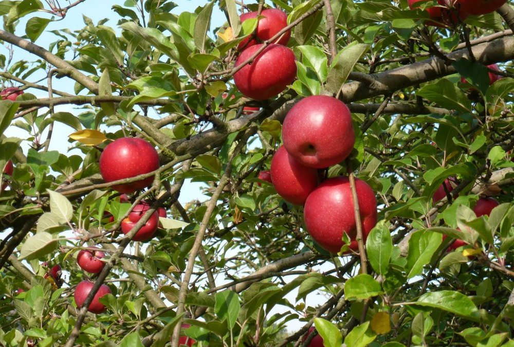 5 Pittsburgh Apple Orchards You Don't Want to Miss