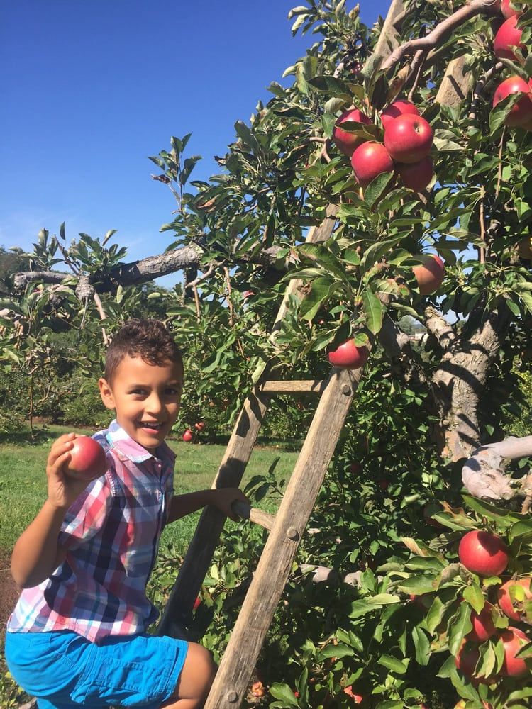 Pittsburgh Apple Orchards You Don't Want to Miss