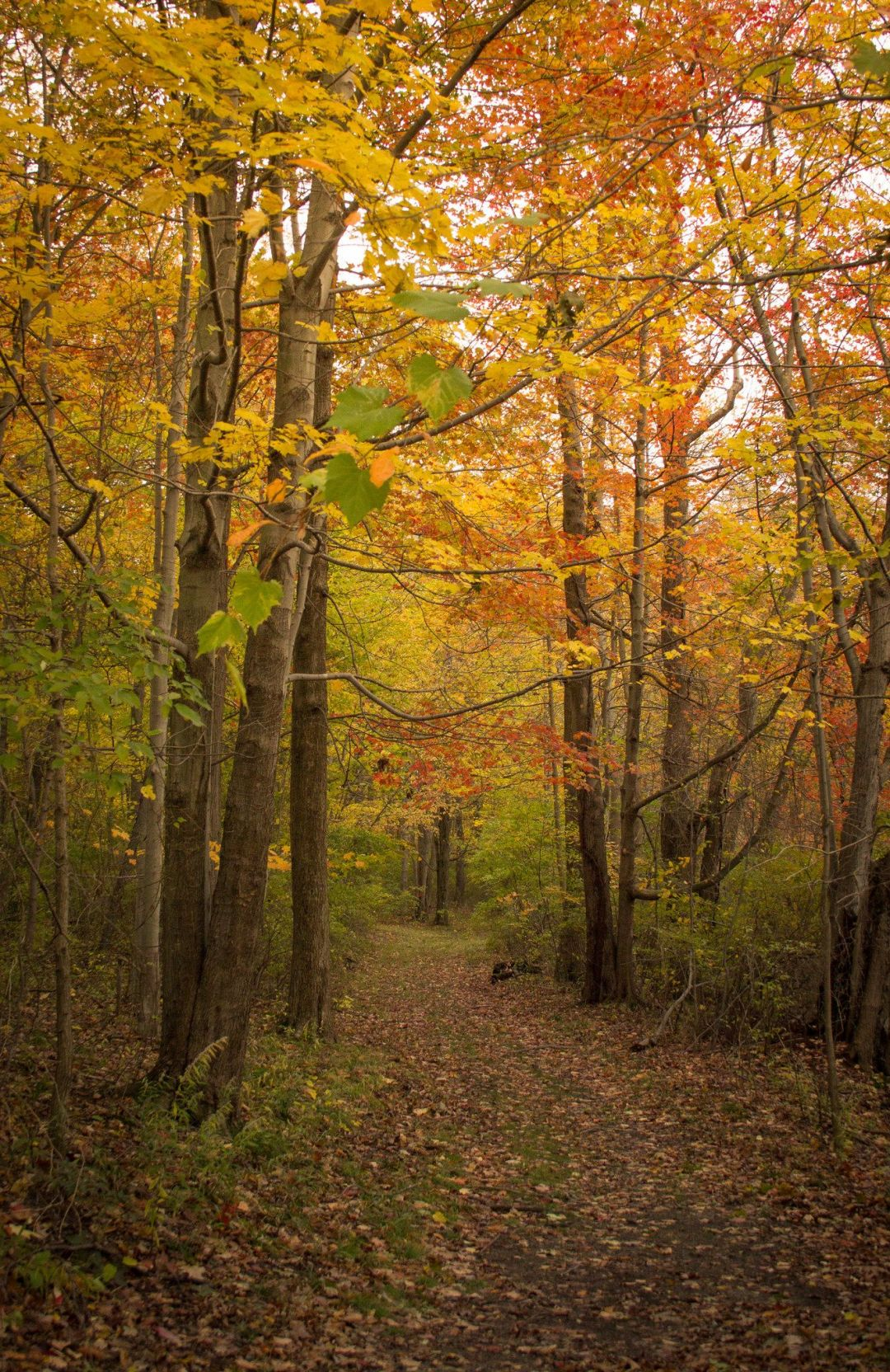 Places to See Fall Leaves Around Pittsburgh