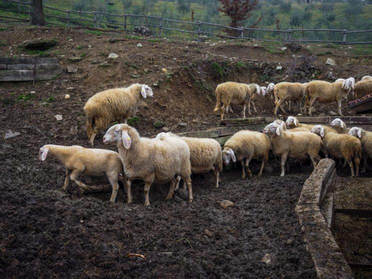 Agriturismo Il Ronco - piuma.me
