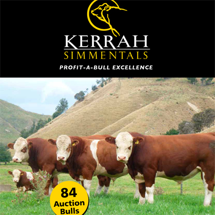 Kerrah Simmentals - 23 May 2017