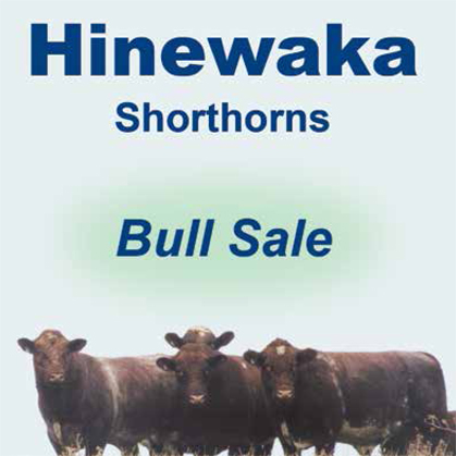 Hinewaka Shorthorns - 7 June 2017