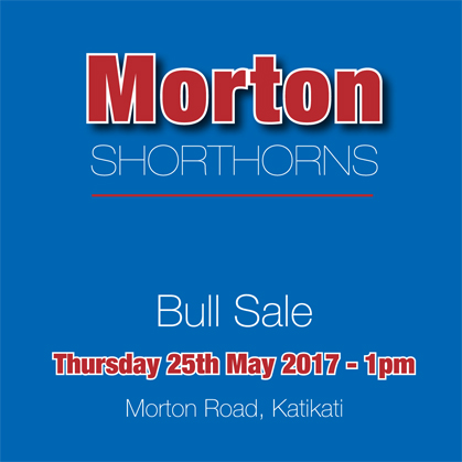 Morton Shorthorns - 25 May 2017