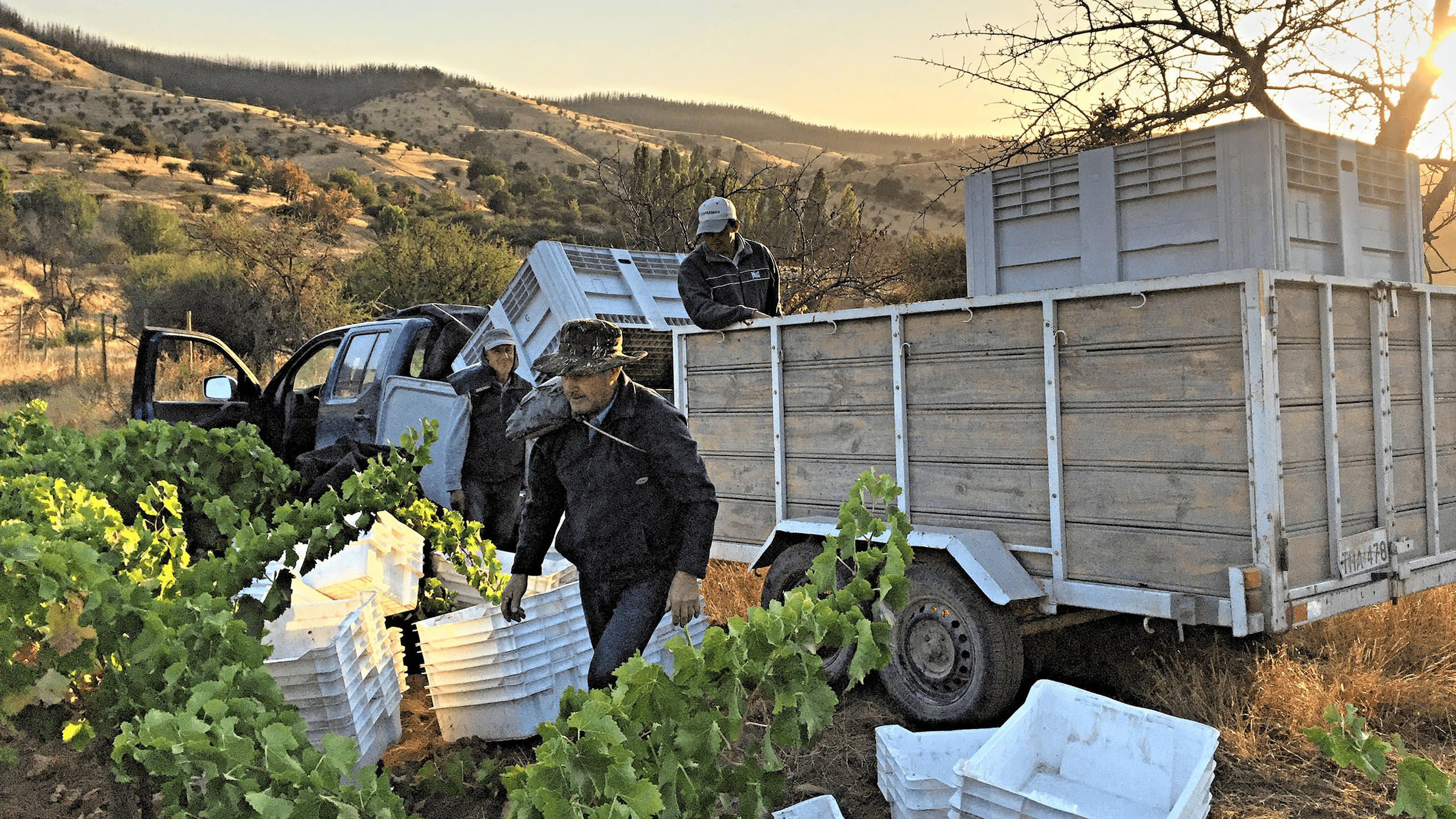 Garage Wine Co. uses dry-farmed grapes grown by small farmers in the Maule Valley