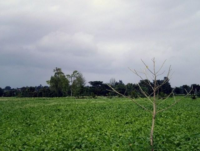 coorg bangalore india