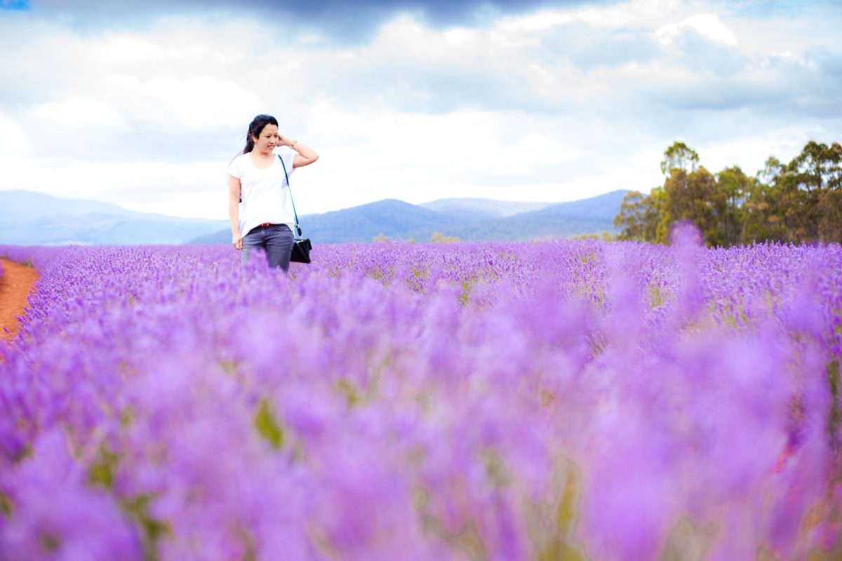 Tasmania - Lavender Field and Bay of Fires