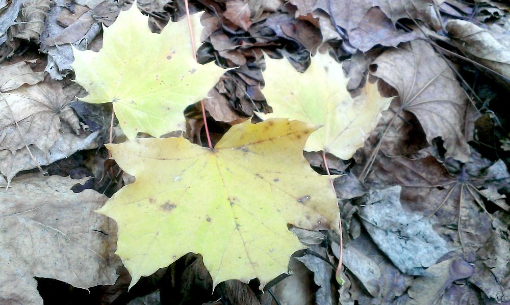 Wie kann man die Blätter im Herbstlaub bestimmen?