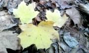 So kann man die Blätter beim Herbstlaub bestimmen