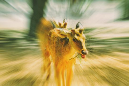 Zoom Burst Photography : Mastering The Zoom Effect in Camera