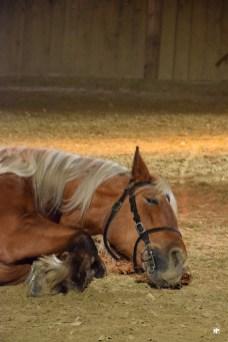 Théatre Equestre