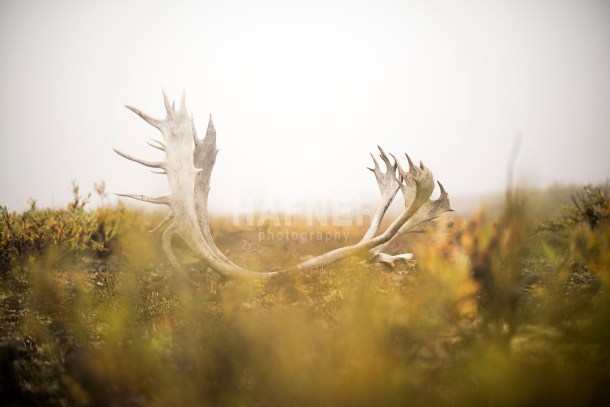 2014 Field & Stream Alaska caribou shoot