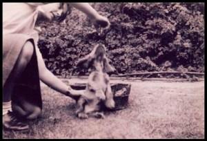 Mum&Spaniel