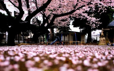 Spring in Japan wallpapers   PixelsTalk.Net