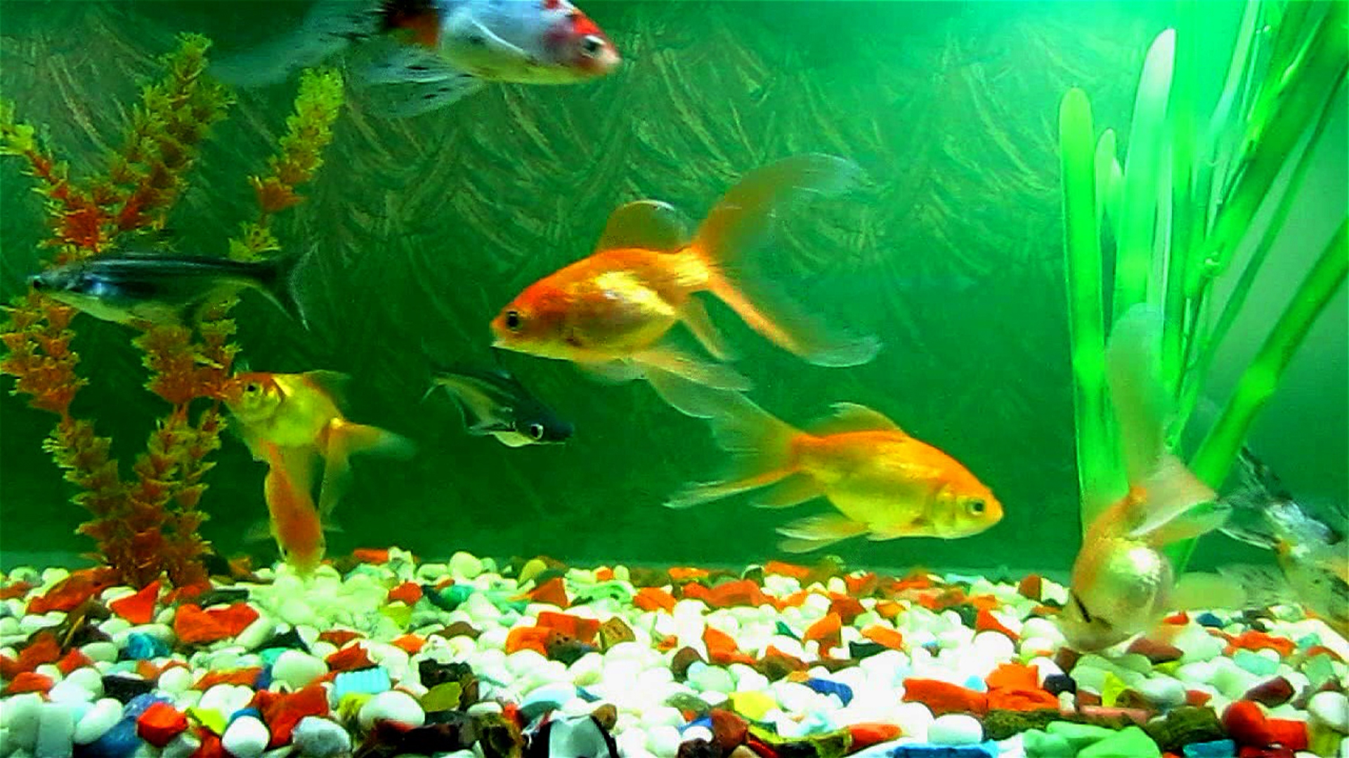 fish wallpapers hd | pixelstalk