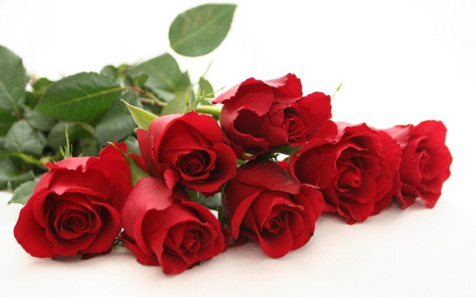 Rose Flower Wallpaper Hd Pixelstalk Net 1920x1080 1080p