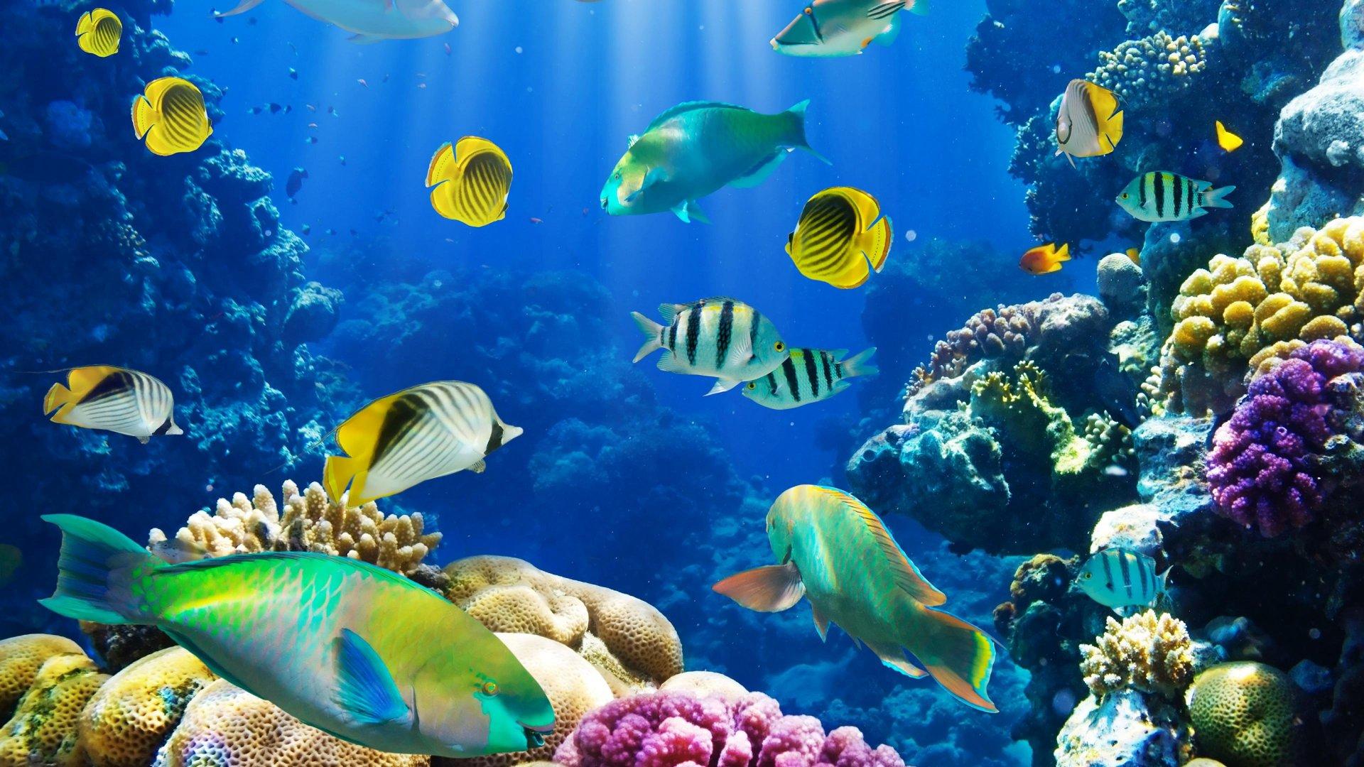 Sea Turtles Swimming In Seaworld