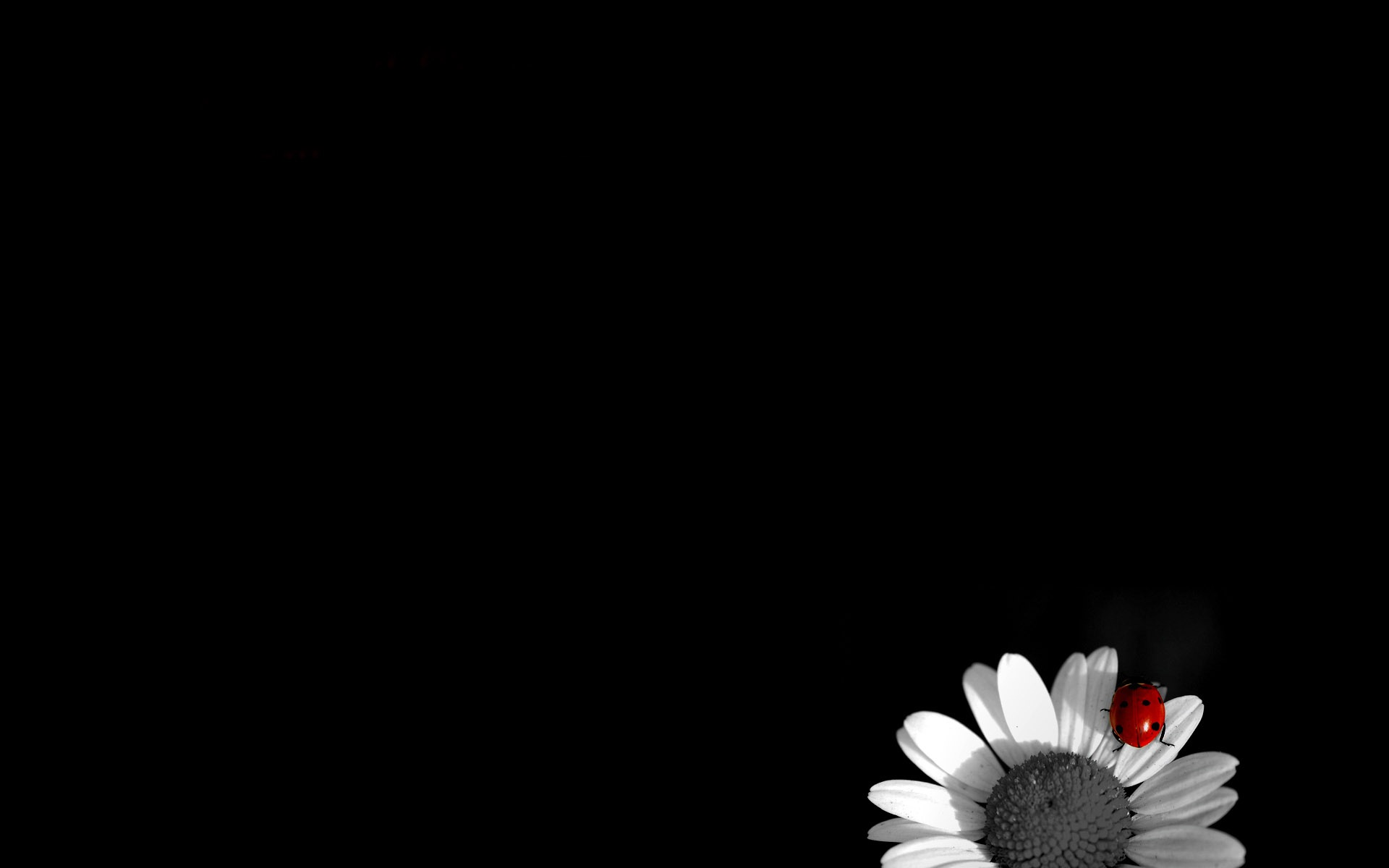 Black And White Hd Wallpapers