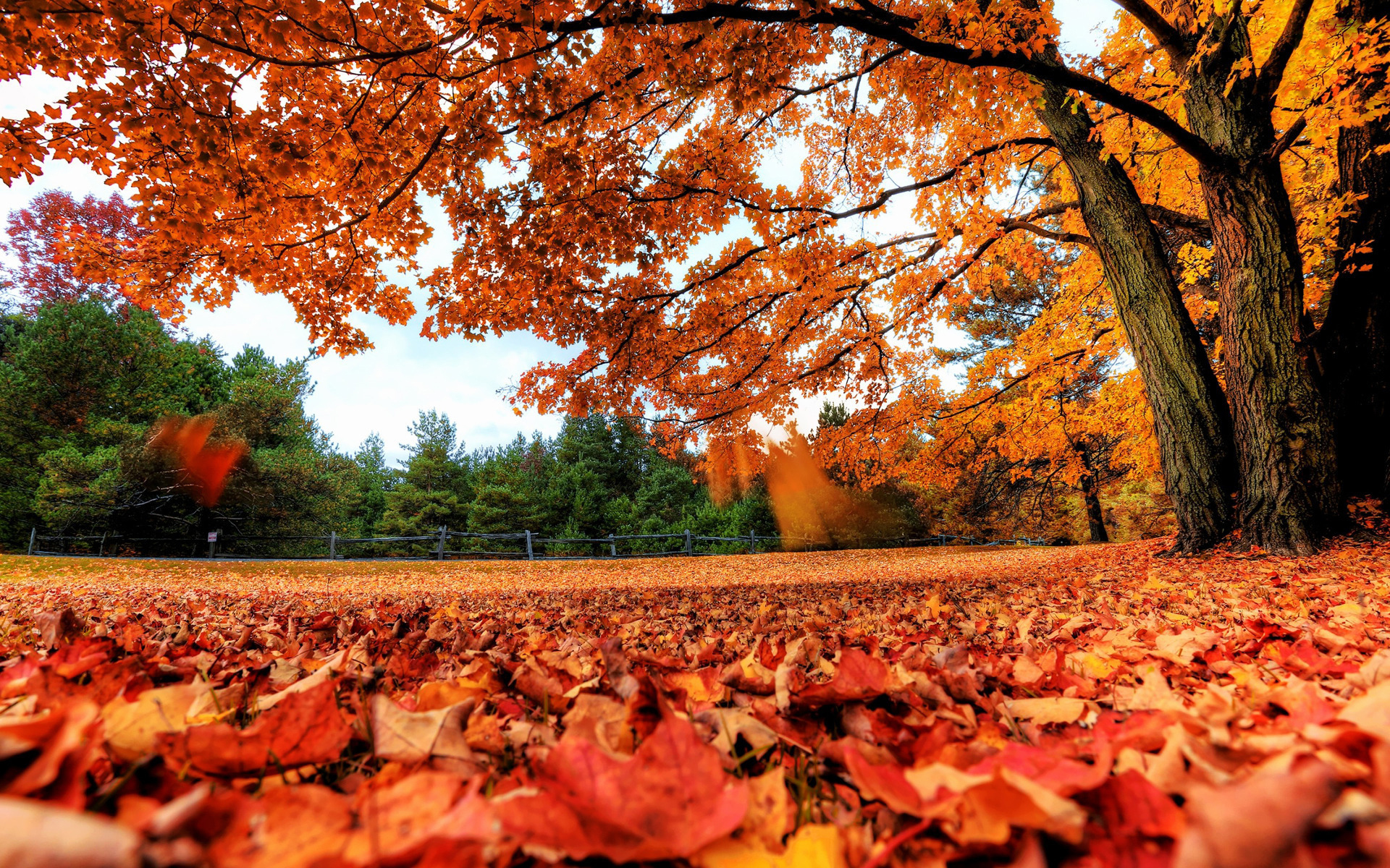 autumn leaves live wallpaper android s on google play