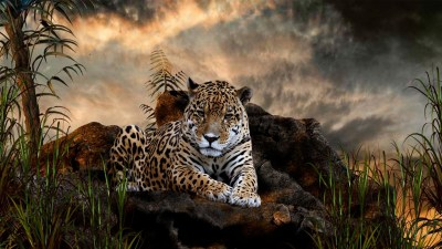 Leopard Wallpapers HD | PixelsTalk.Net