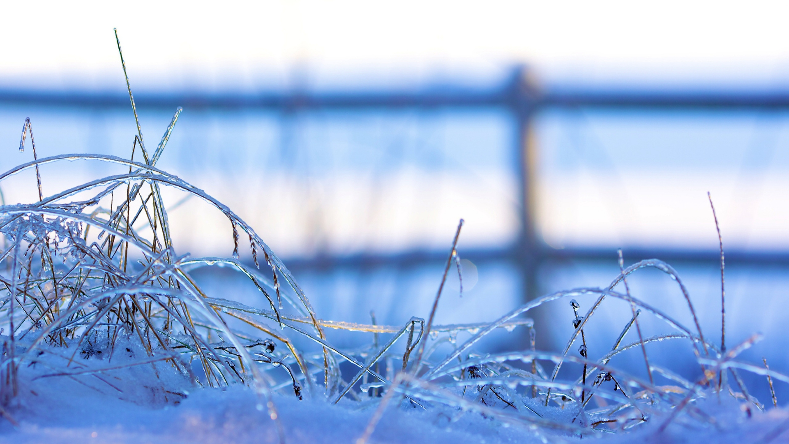 Frozen Backgrounds Free Download