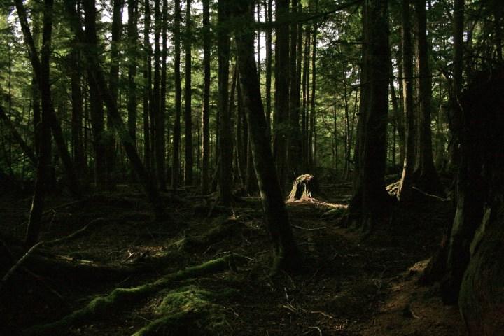Dark Woods Wallpapers Hd Free Pixelstalk Net