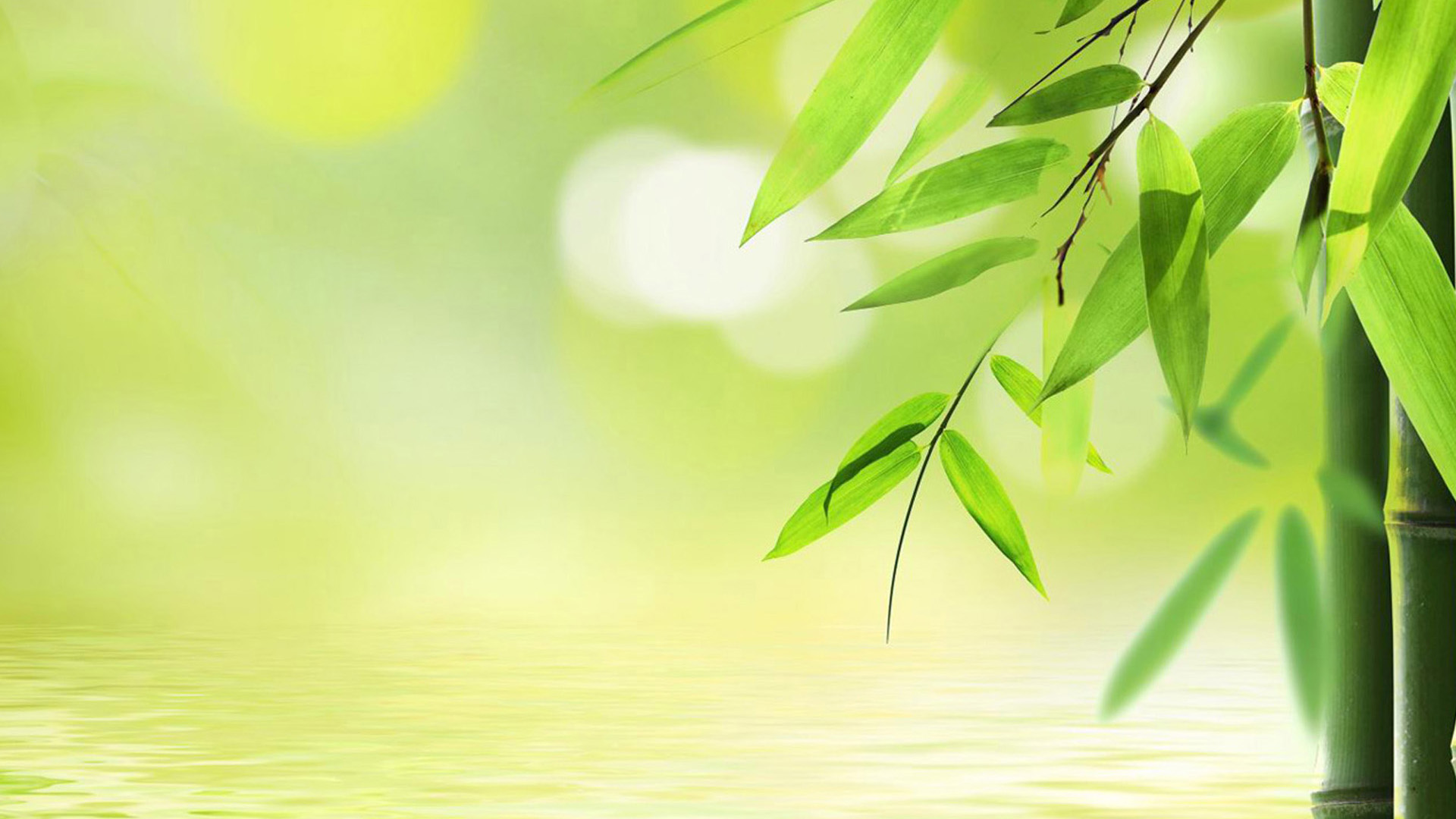 Free HD Bamboo Wallpapers