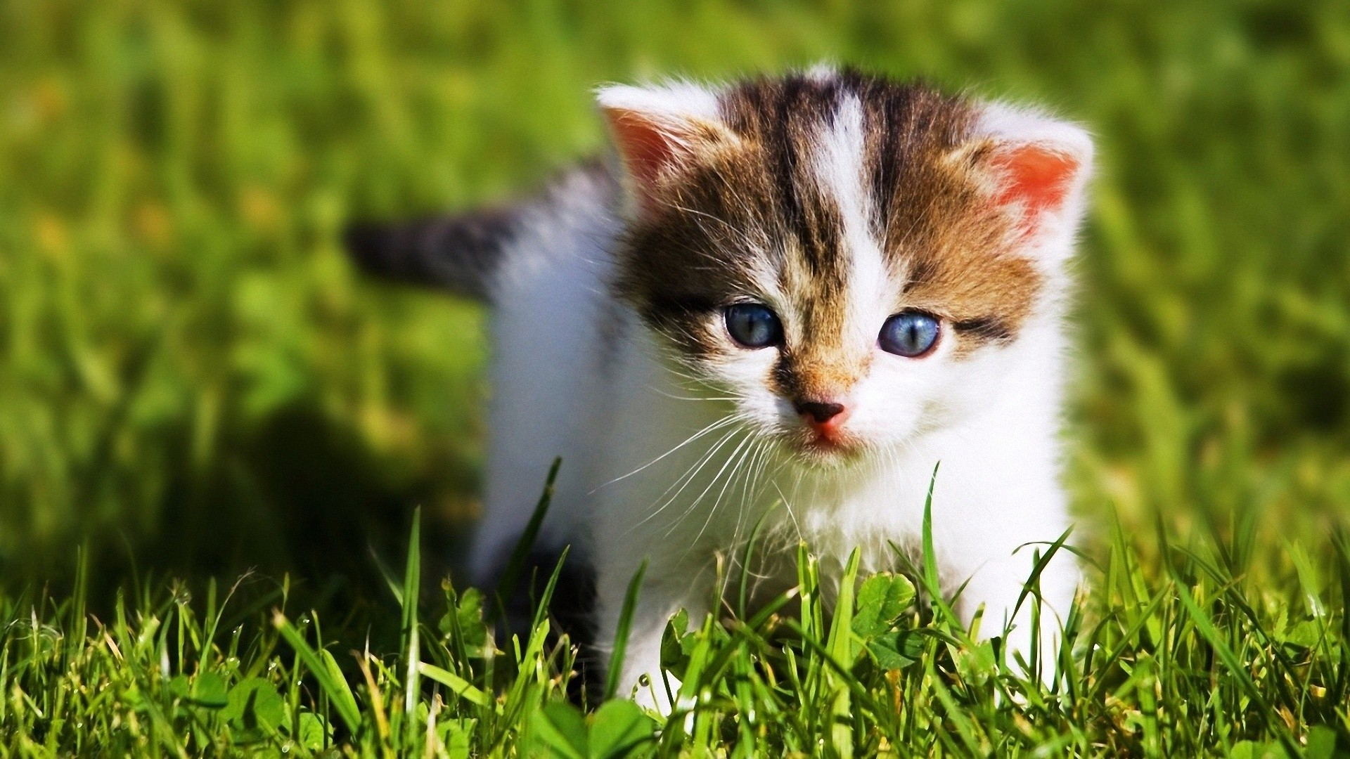 Free Download Cute Baby Animal Wallpapers