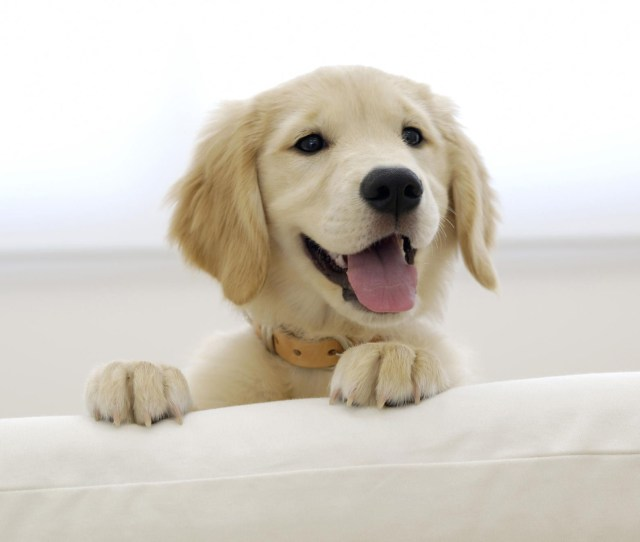 Cute Puppy Wallpaper Free Download