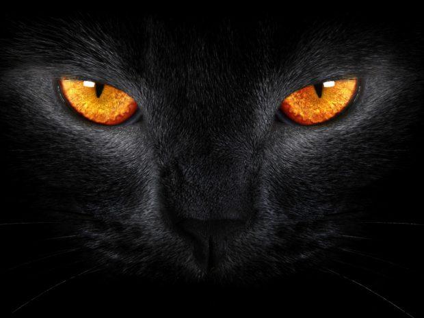 Black and Orange Cat Wide 1600x1200.