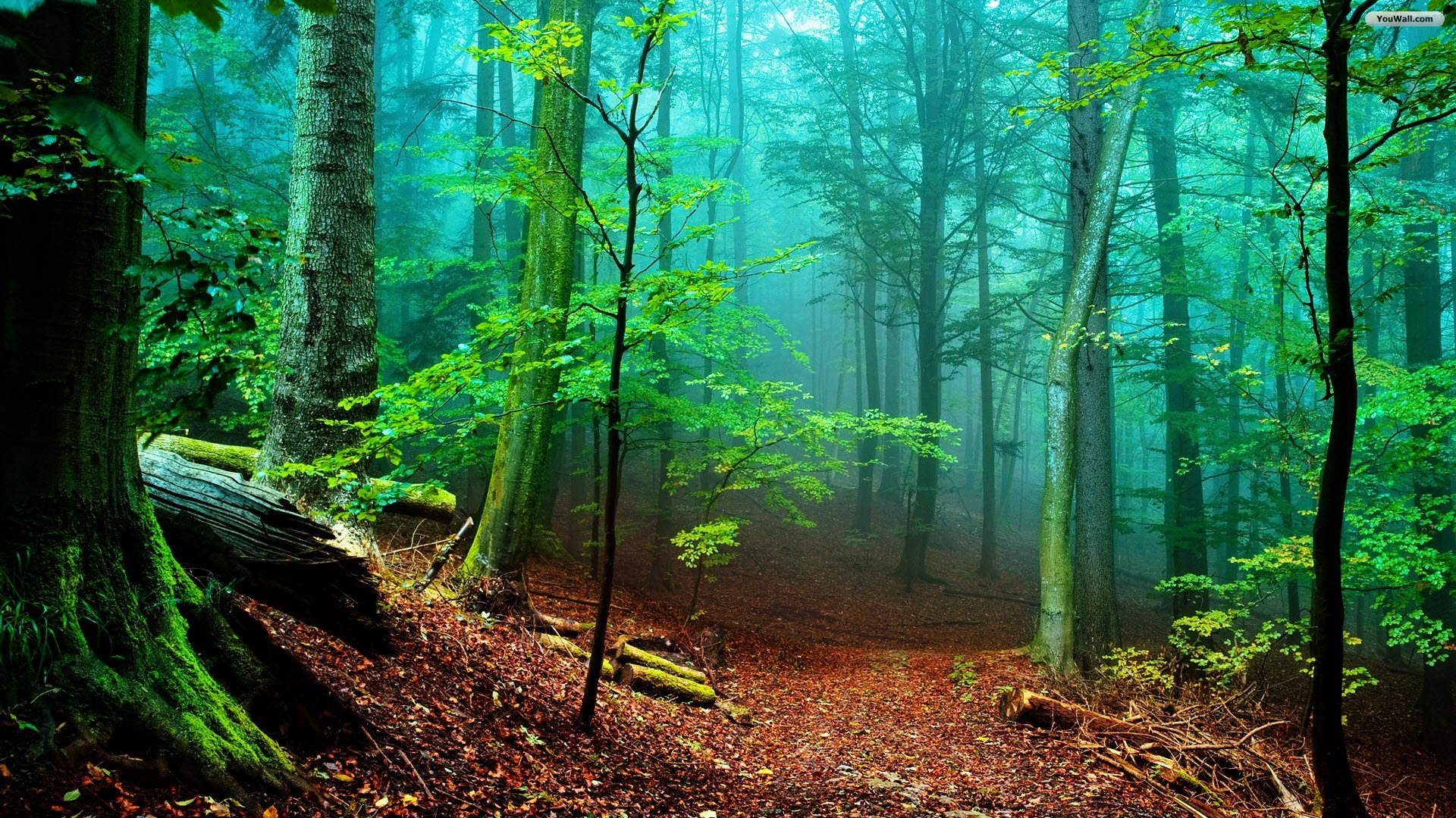 Forest Backgrounds HD Free Download