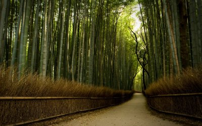 Download Free Bamboo Forest Background | PixelsTalk.Net