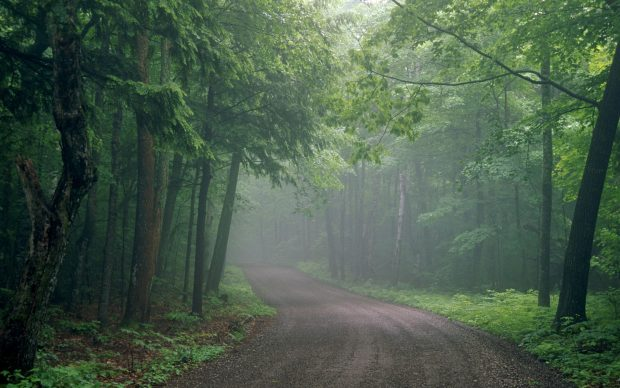 Foggy Forest Backgrounds Free Download.