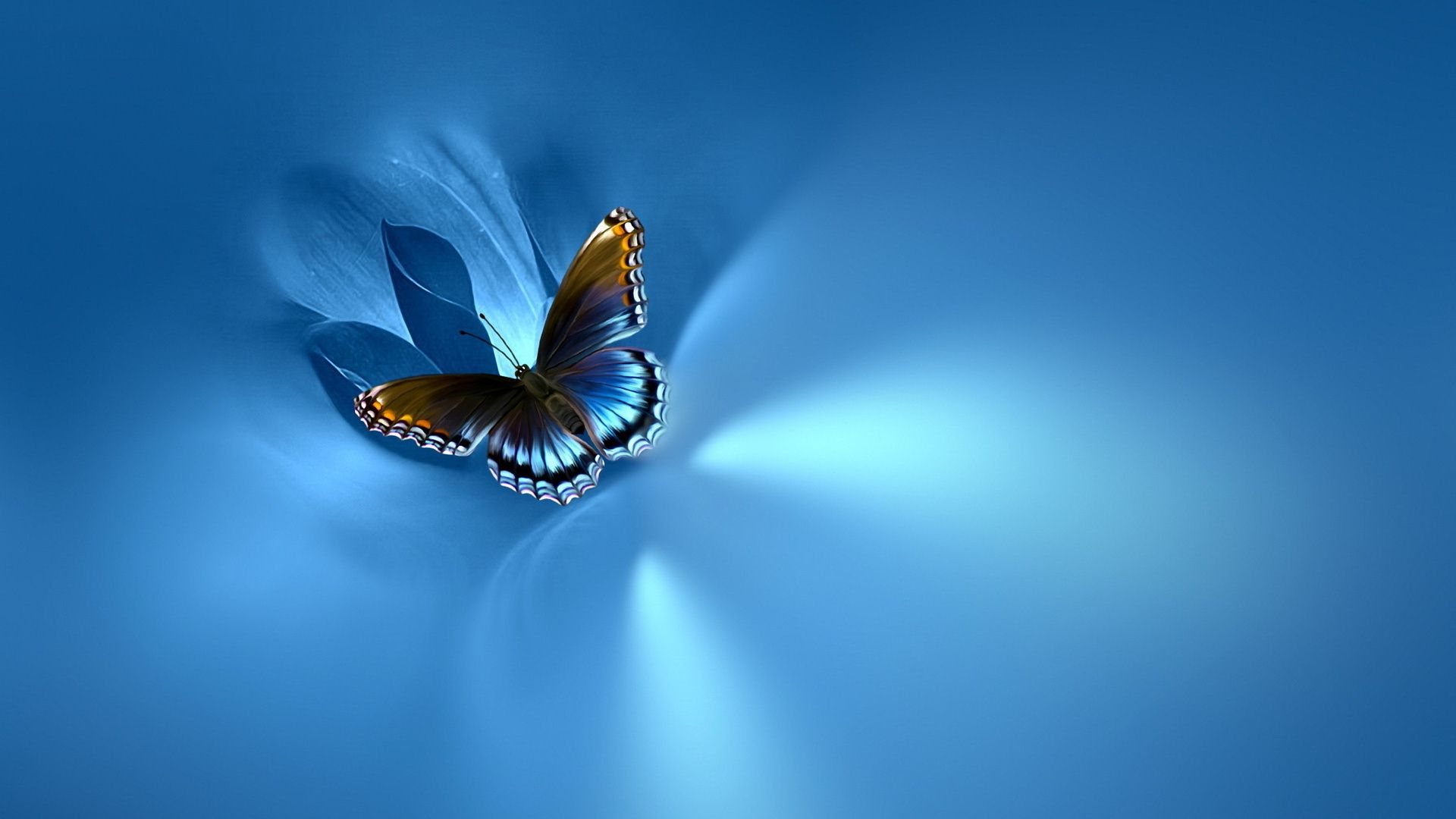 Blue Butterfly Wallpaper HD   PixelsTalk Net Blue Butterfly Wallpaper Desktop