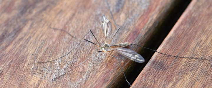 Everything You Need to Know About Fungus Gnats