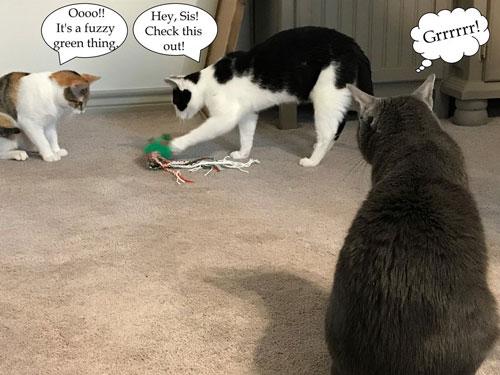 Kittens batting DIY mouse.