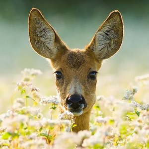 Strength & Vulnerability   Deer Medicine   SouLodge