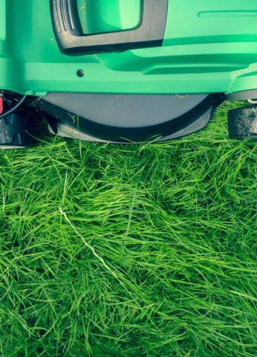 orlando lawns turning into a suburban garden - as seen on pixiespocket.com
