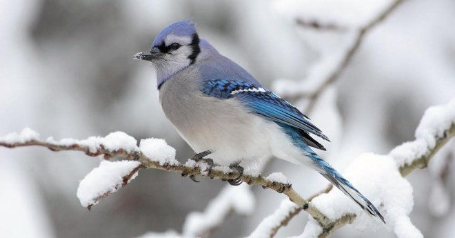 from Pixiespocket.com -- Birds are great to have around! I take pains to care for the wild birds in winter, since it can be a rough time to survive. Tips, tricks, and some DIY projects for you to try!