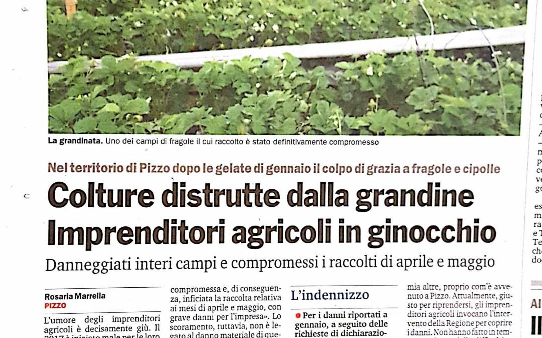 Colture distrutte dalla grandine Imprenditori agricoli in ginocchio.