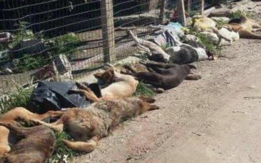 Nuovi casi di animali avvelenati, a Pizzo cresce la preoccupazione