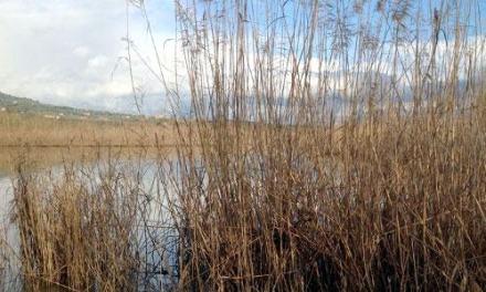 Finanziati i progetti per la pulizia del Lago La Vota e delle Dune dell'Angitola