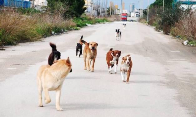 Azzannata da cani randagi, paura per una donna di Briatico