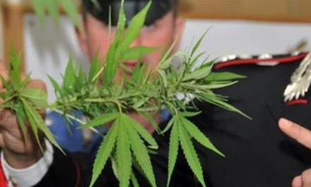 Piantine di marijuana a Pizzo, denunciato un 18enne