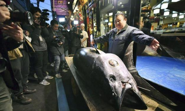 Giappone: asta record al mercato del pesce. Un boss del sushi paga 3 milioni per un tonno rosso – Terra & Gusto