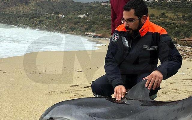 Delfino recuperato in mare, portato sulla spiaggia muore dopo il salvataggio