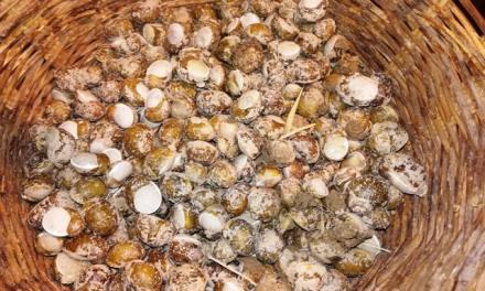 Catanzaro: continua la raccolta delle lumache, tra storia e tradizione | CalabriaMagnifica.it