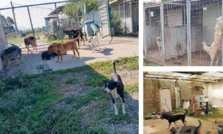 """""""Canile degli orrori"""" tra Gioia Tauro e Rosarno, animali morti o affamati abbandonati nelle gabbie"""