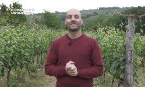 """Pizzo, la """"via dello zibibbo"""" porta dritta alle Cantine Benvenuto – Corriere della Calabria"""