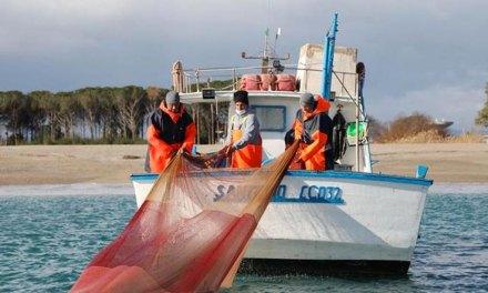 Pesca della sardella in Calabria, la Regione dà il via alla campagna sperimentale – il Lametino.it