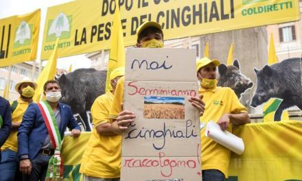 Coldiretti Lazio, protesta alla Regione contro l'invasione dei cinghiali